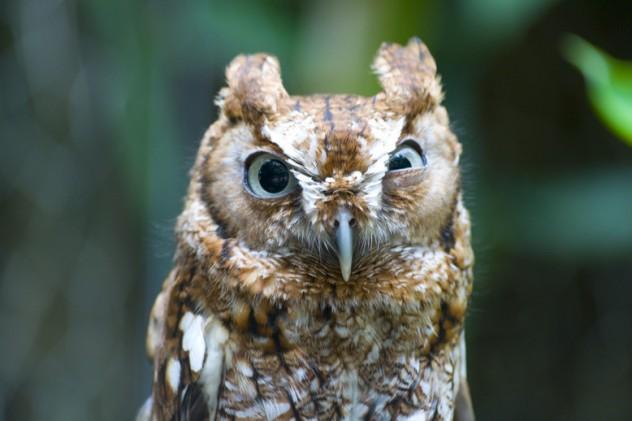 10 интересных фактов о совах